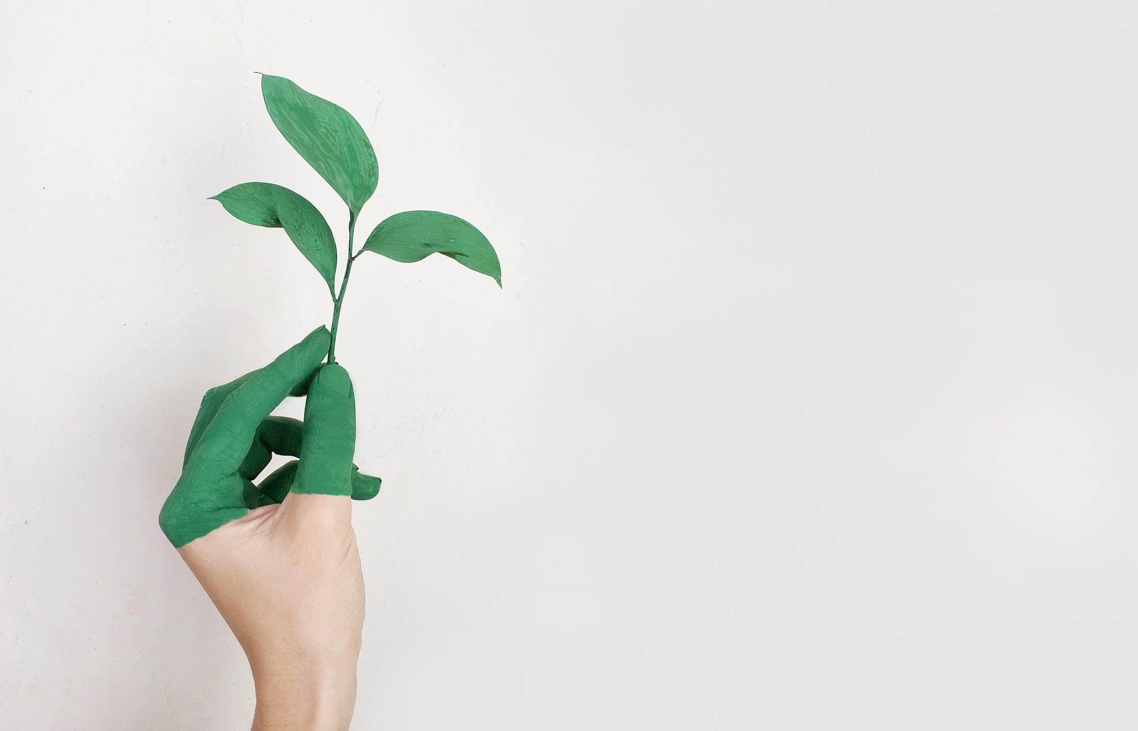 centro estetico sostenibile