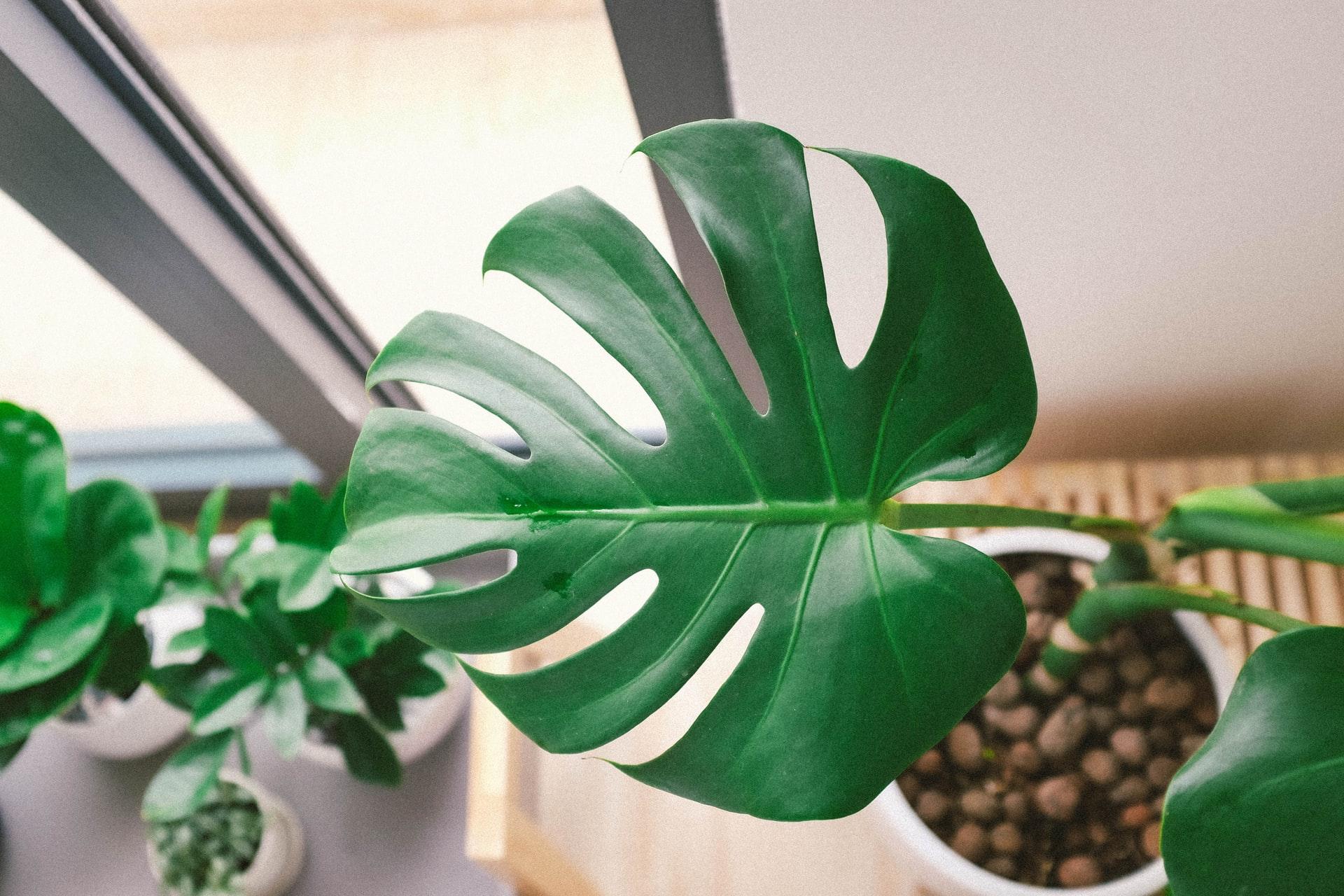 piante centro estetico